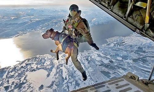 dog-sky-diver